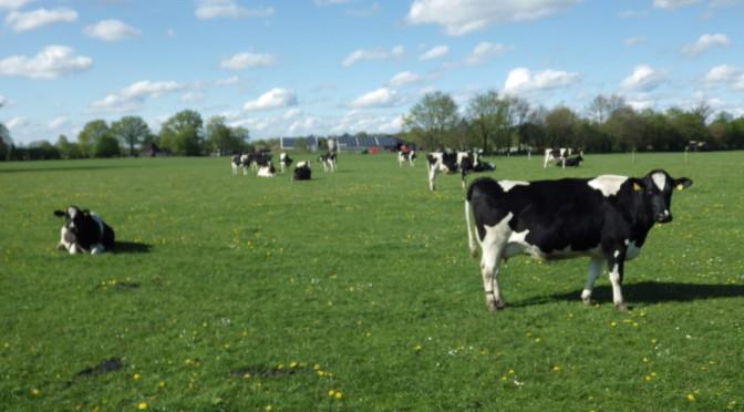 Ausflug zum Öko-Melkburen